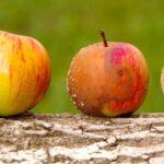 Kako razlikovati dobrog trgovca plemenitim kovinama od lošeg