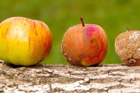 Kako razlikovati dobrog trgovca plemenitim...